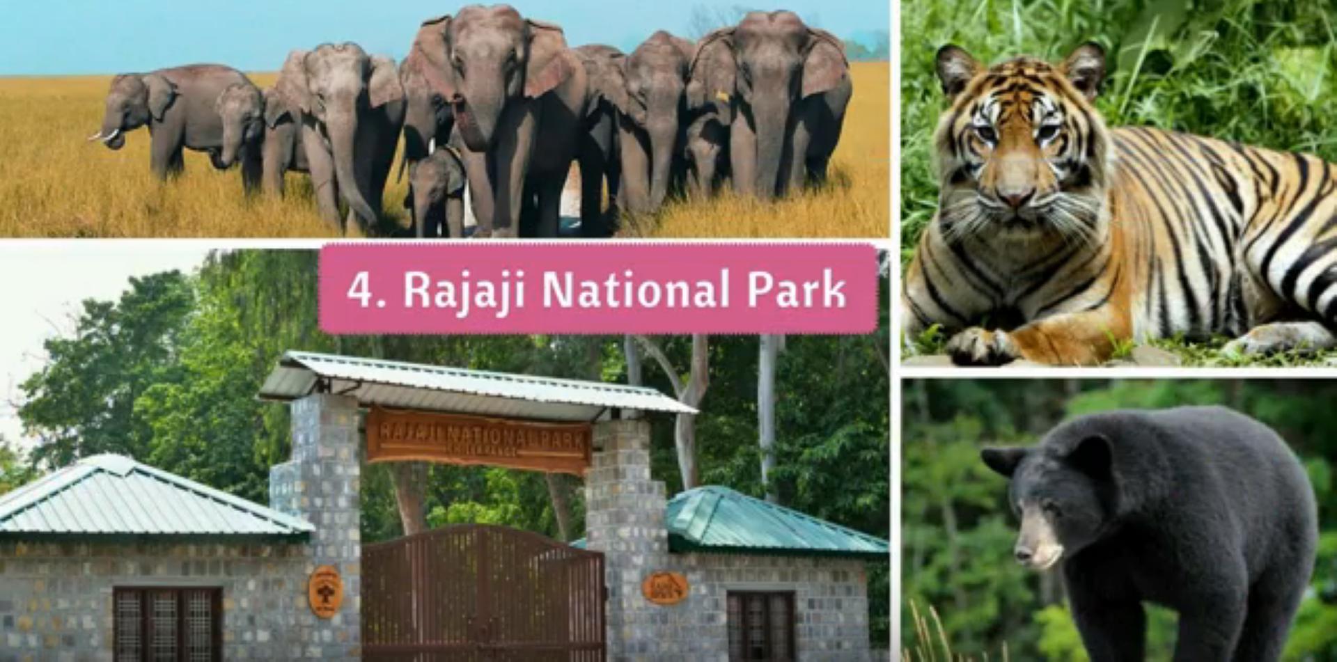 Rajaji National park tour by tempo traveller