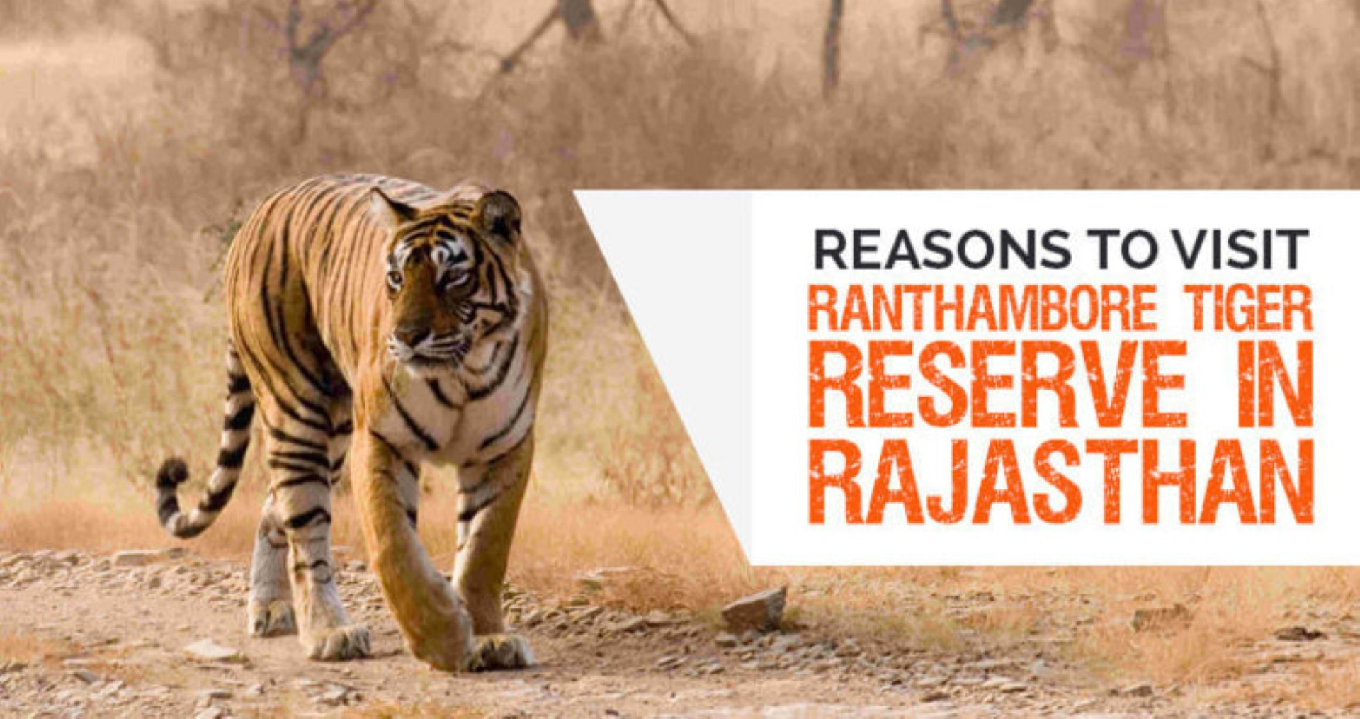 place to visit Ranthambore