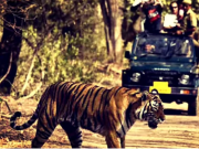Corbett National Park tour by tempo traveller