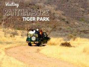 Tiger Park tour by tempo traveller